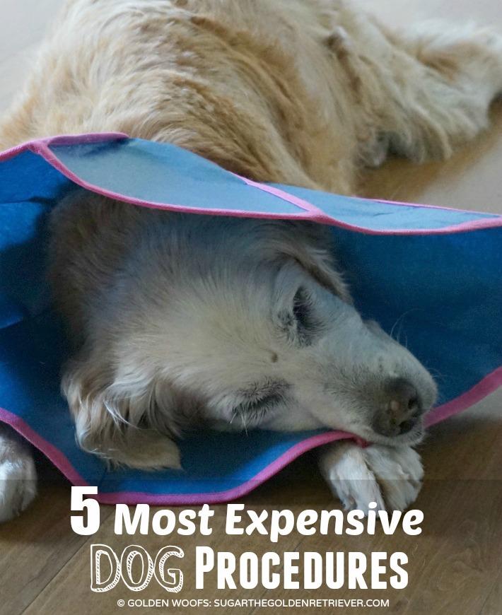Expensive Dog Procedures