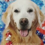 5 Golden Dogs For President