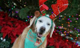 Get Your Dog Into the Holiday Spirit #HeadsUpForTails