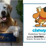 RSVP Holiday #ChewyChat Twitter Chat with Chewy.com