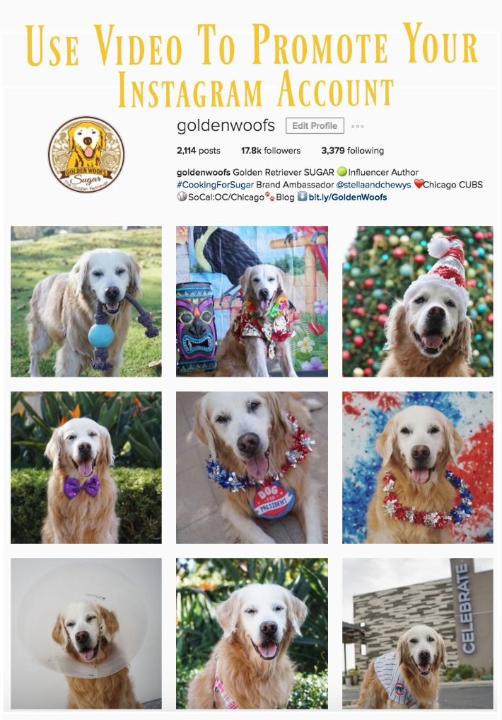 Instagram Account Golden Woofs