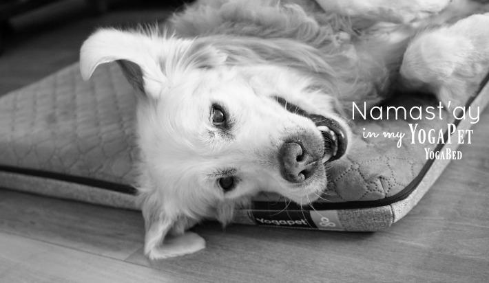 YogaPet dog bed by YogaBed