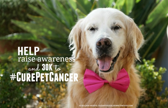 HELP Raise Awareness Nationwide is on a Mission to #CurePetCancer