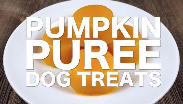 Video DIY Pumpkin Puree Dog Treats #CookingForSugar