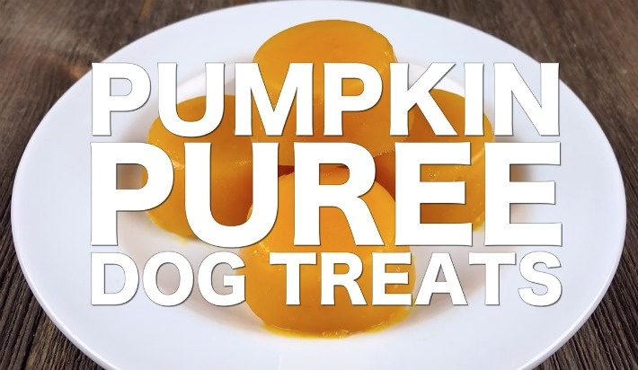 DIY Pumpkin Puree Dog Treats