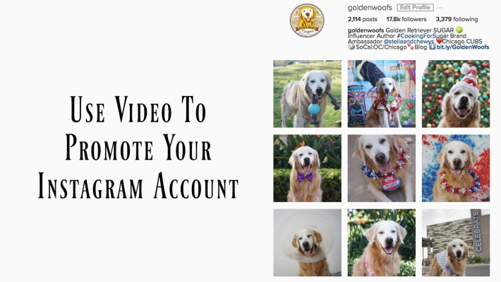 Video Instagram Account Golden Woofs