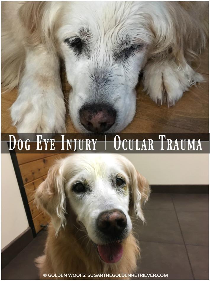 Dog Eye Test Cost