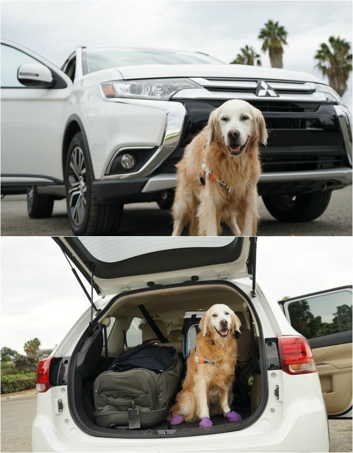 dog friendly car ride