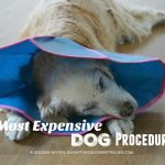 5 Most Expensive Dog Procedures