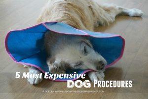 5 Most Expensive Dog Procedures