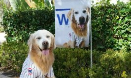 Celebrating Cubs Win with Flagology Custom Photo Flag