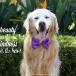 {This Moment} See Beautiful: Beauty and Kindness