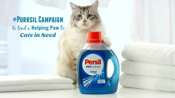 Persil Laundry Detergent - cats love laundry