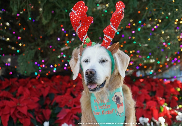 Holiday Rudolf Dog Bandana