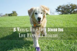 5 Ways to Help Your Senior Dog Live Happy and Healthy