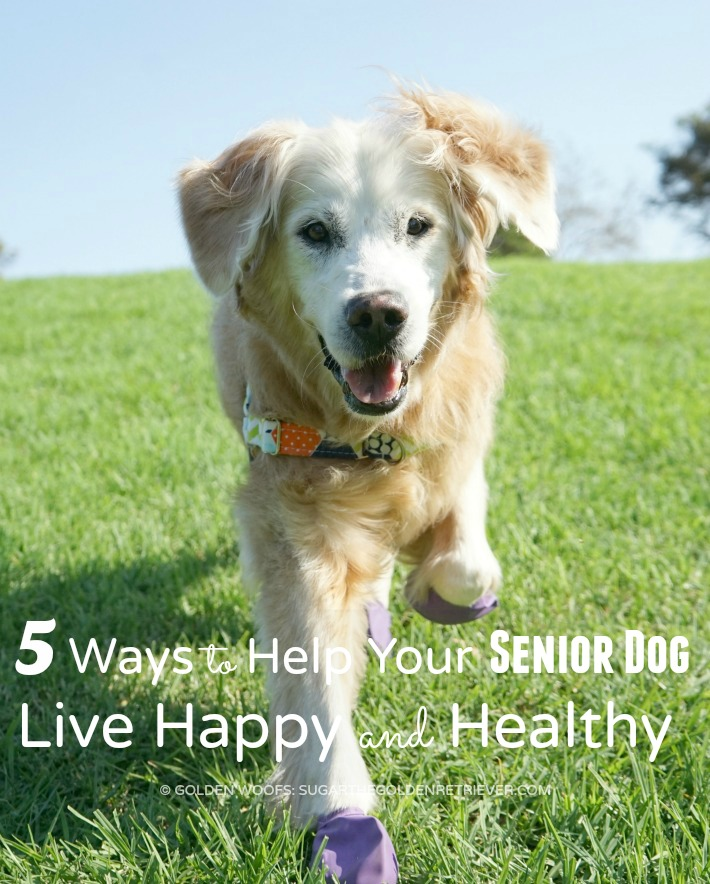 Senior Dog Live Happy Healthy