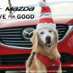 Golden Thanks to Mazda Drive For Good #MazdaDrive4Good