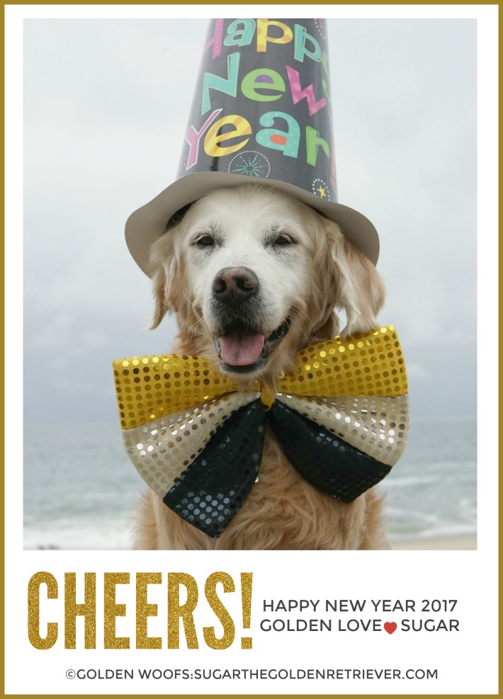 SUGAR the Golden Retriever 2017 Happy New Year Greeting