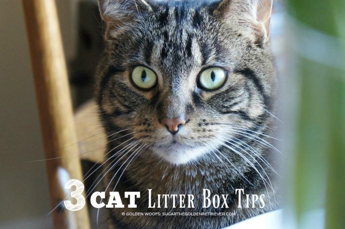 3 Cat Litter TIPS