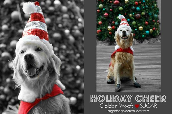 SUGAR's Holiday Cheer