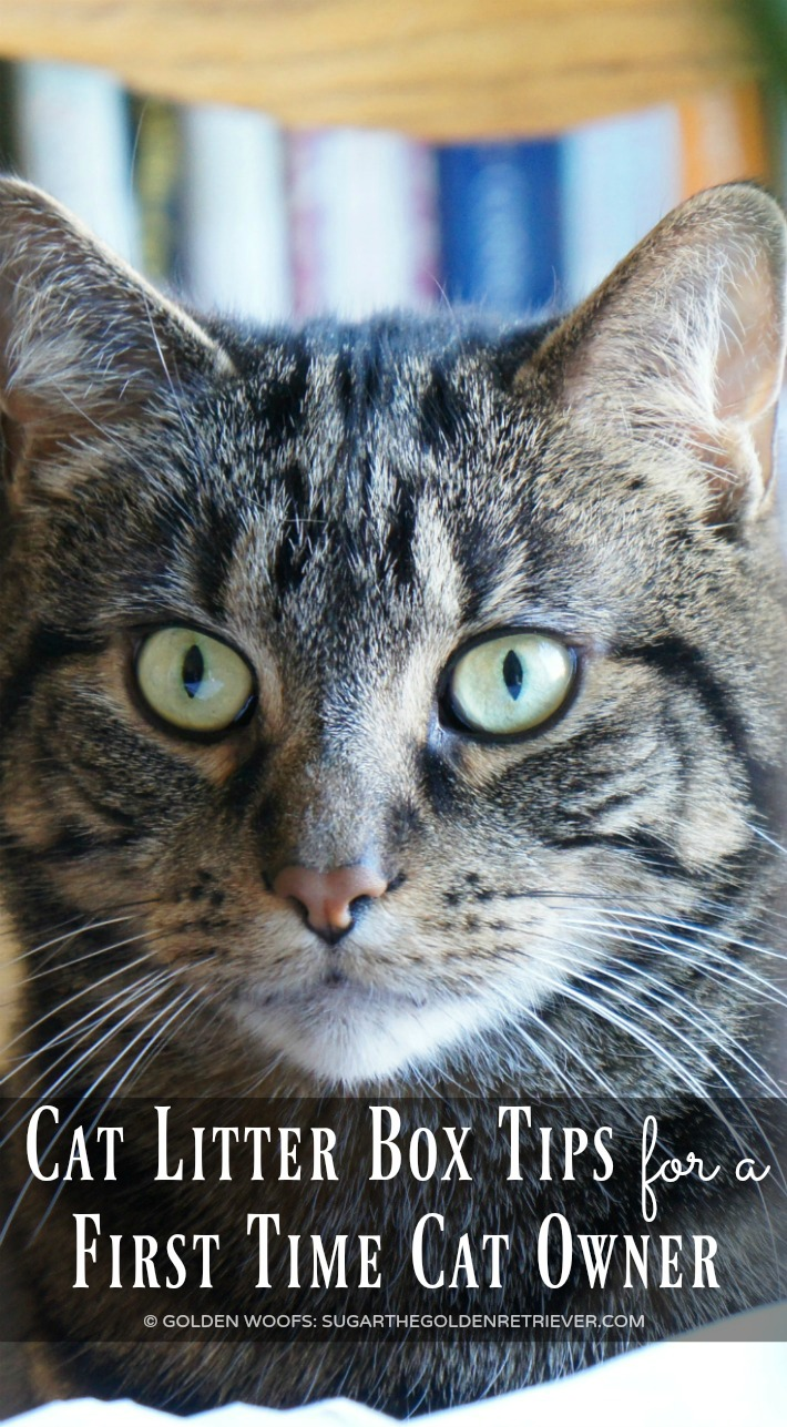 Odor Control Cat Litter Box Tips for a First Time Cat Owner