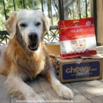 From Chewy.com #StellaAndChewys Meal Mixer SuperBlend #ChewyInfluencer