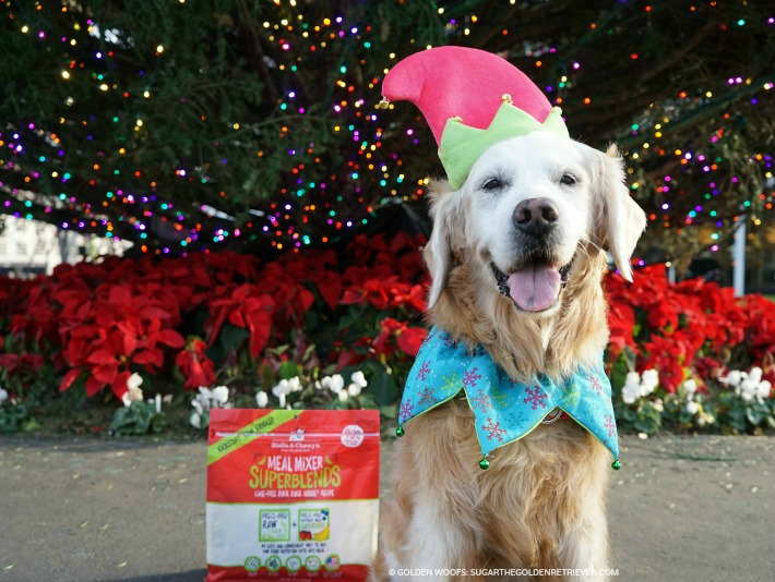 Dog Holiday Smile Everyday Awesome with Stella and Chewy's Meal Mixer