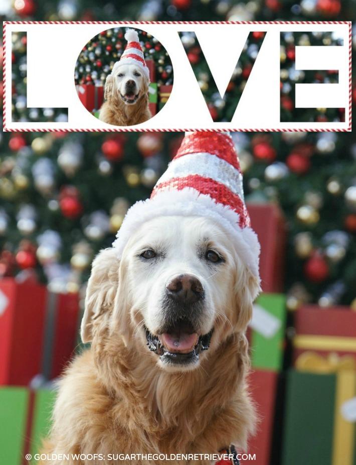 dog themed holiday card