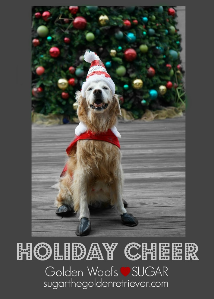 Sugar golden retriever Holiday Cheer