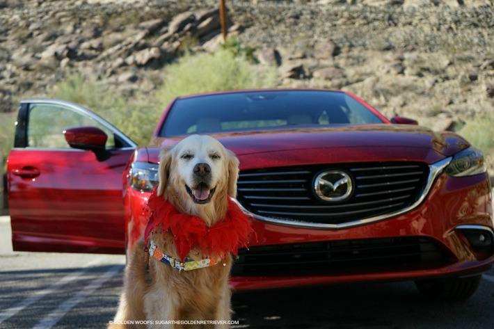 dog friendly 2017 Mazda 6