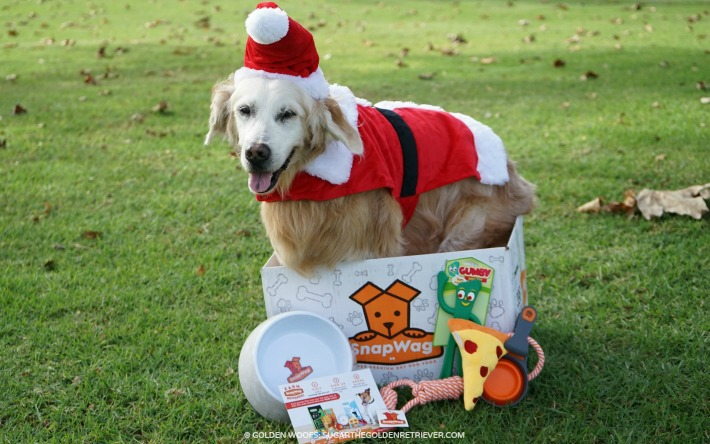 Surprise Your DOG With A #SnapWag Dog Box