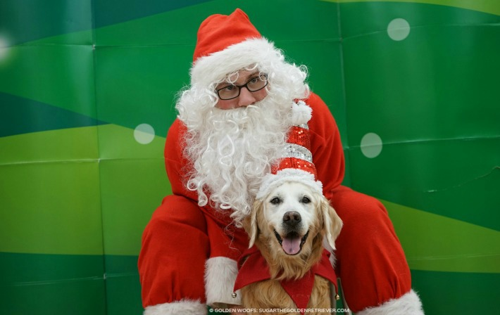 Santa Day at Petco Joy Love Pets