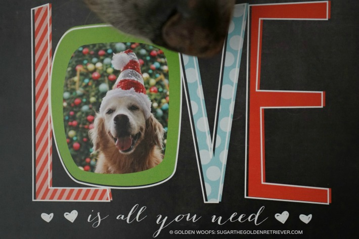 LOVE Dog-themed Holiday card