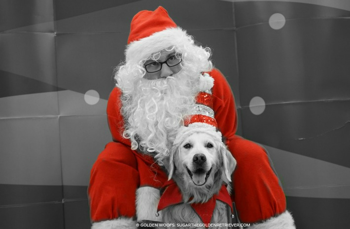 Santa Day at Petco