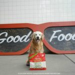 Kickstart Your Kibble with Stella & Chewy's Meal Mixer Superblends