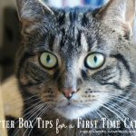 Cat Litter Box Tips for a First Time Cat Owner