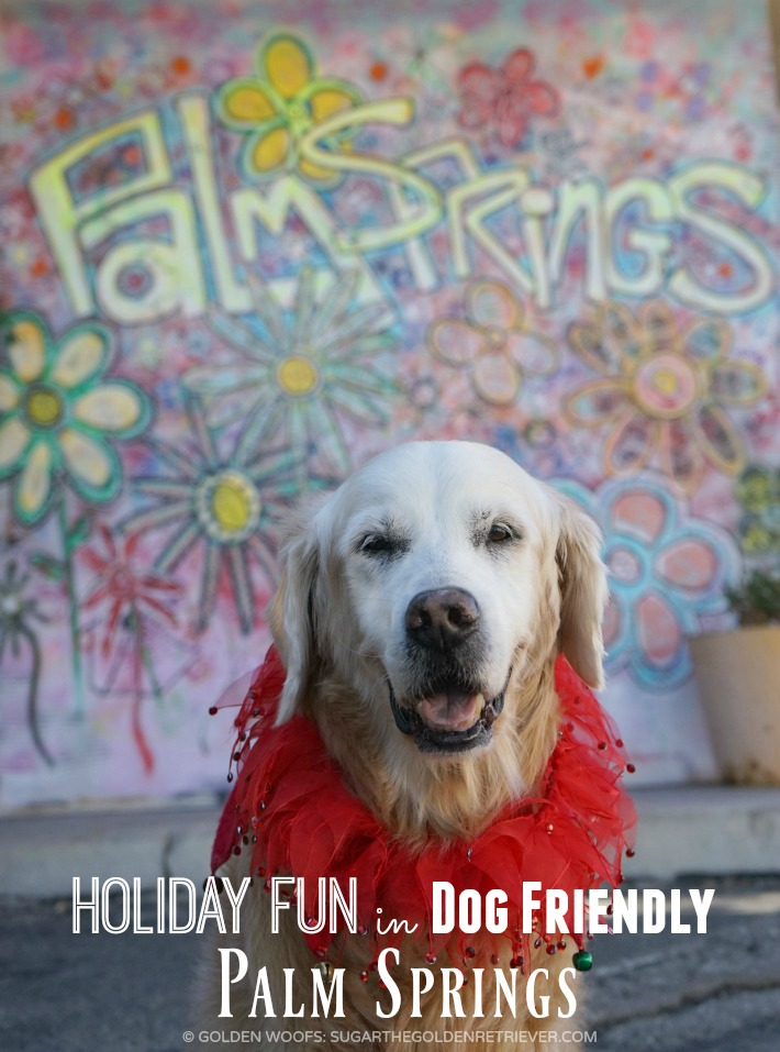 SUGAR's holiday fun dog friendly palm springs