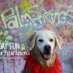 SUGAR's Holiday Fun in Dog Friendly Palm Springs