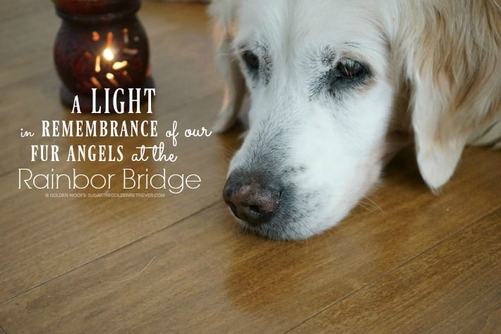light in remembrance of our fur angels