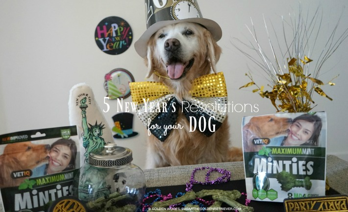 5 New Year's Resolutions For Your Dog #MintiesTreats