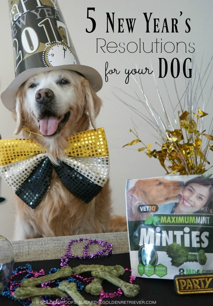 resolutions for your dog featuring minties dental treats