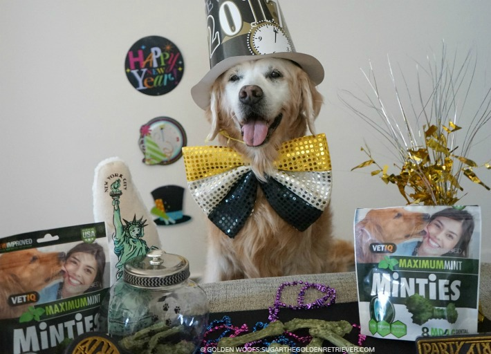 5 Resolutions for your dog featuring Minties Treats