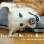 3 Tips to Ensure your Dog Gets a Healthy Sleep #Yogapet