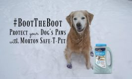 #BootTheBoot Protect Your Dog's Paws with Morton Safe-T-Pet