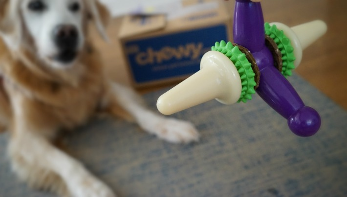 PetSafe Busy Buddy Jack DogToy from Chewy.com