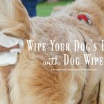 Wipe Your Dog's Butt with Dog Wipes #TusheeWipes