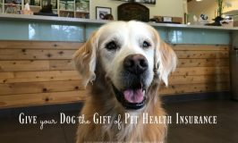Give Your Dog the Gift of Pet Health Insurance #PetsBest