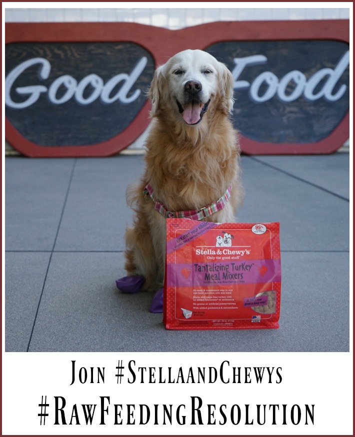 PET Raw Feeding Resolution with Stella and Chewy's