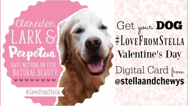Get Your Dog #LoveFromStella Valentine's Day Digital Card #StellaandChewys