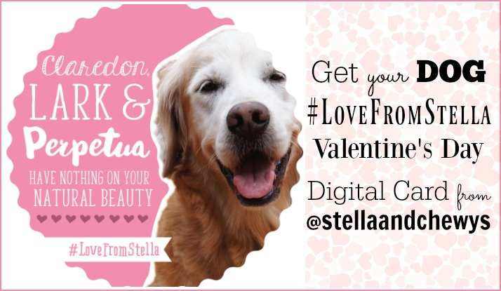 Valentine's Day digital card love from stella and chewy's